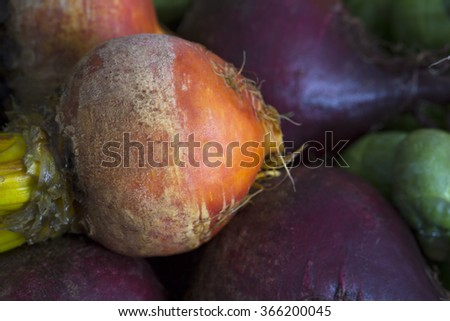 Closeup of raw golden beetroot with other beets and winter vegetables. - stock photo