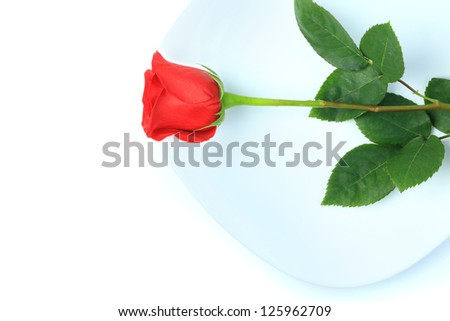 Closeup of red rose on white plate on white background