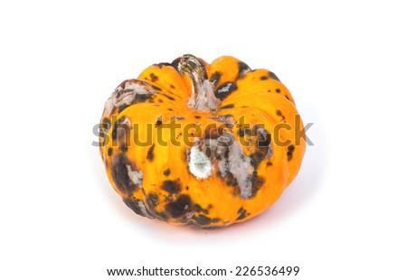 Closeup of  rotten pumpkin - stock photo