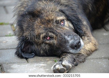Closeup of Sad Stray Dog Laying on Pavement - stock photo