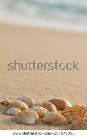 Closeup of sea shells. Holiday concept - stock photo