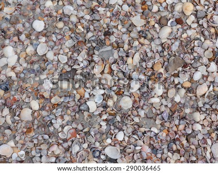 Closeup of sea shells on the sand at the beach - stock photo