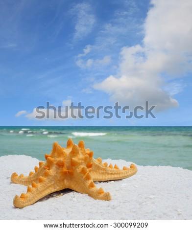 Closeup of Sea Star on White Sand Florida Beach - stock photo