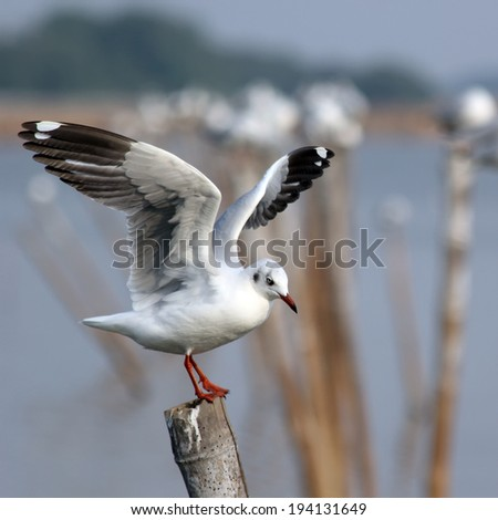 closeup of seagull sitting on a pole