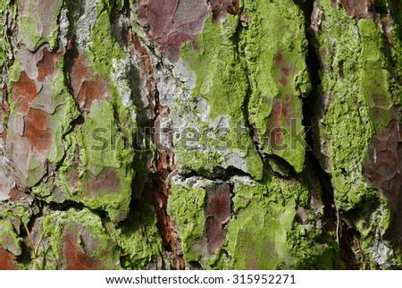 Closeup of section of tree bark for textured backgrounds. - stock photo