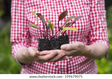 Closeup of senior woman holding a plant, new sprout in her hands