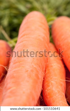 Closeup of several orange carrots on a white background