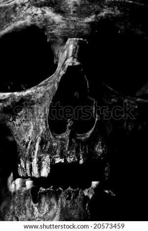 closeup of skull - stock photo