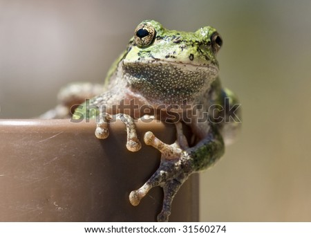 closeup of small frog sitting on a pole