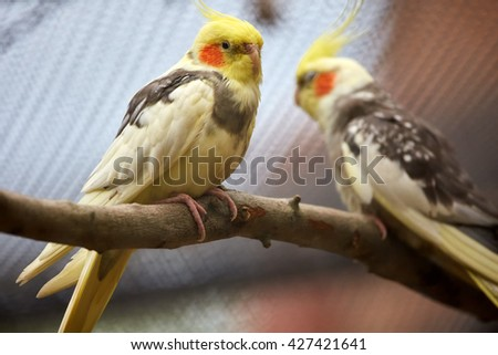 Closeup of small parakeets on branch with selective focus