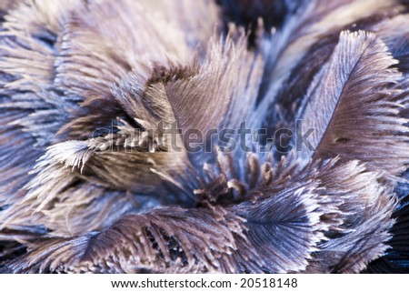 Closeup of some ostrich feathers