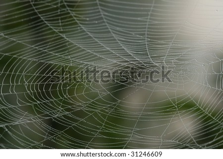 Closeup of spider web with dew drops