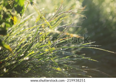 Closeup of spiritual  and  blurry grass with water droplets. - stock photo