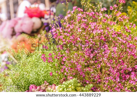 Closeup of spring flowers, fresh floral market, floral background - stock photo