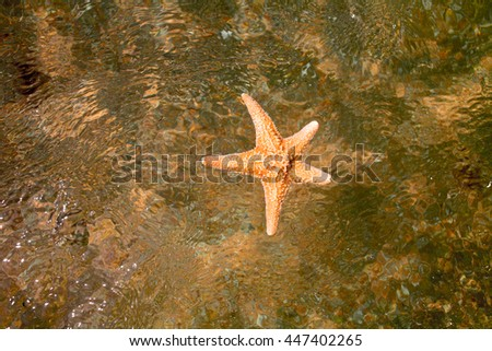 Closeup of starfish in water top view. Diving in summertime in topical resort. - stock photo