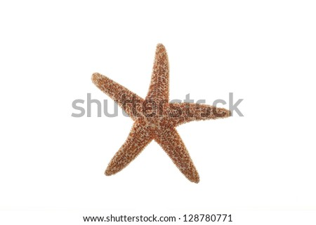 Closeup of Starfish Isolated on White Background - stock photo