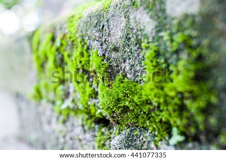 Closeup of stone with moss