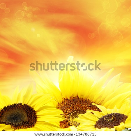 Closeup of sunflowers and bright sky - stock photo