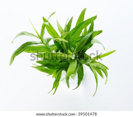 Closeup of tarragon herb - stock photo