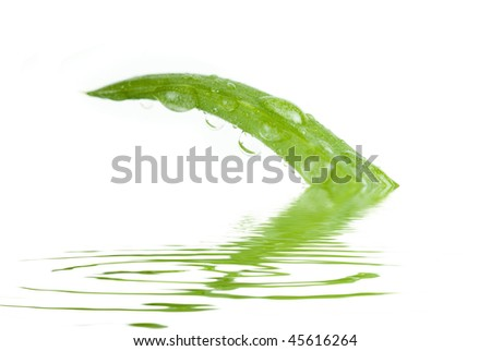 Closeup of the Aloe Vera sliced leaf with juice droplet - stock photo