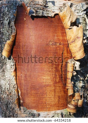 closeup of the bark of a birch tree - stock photo