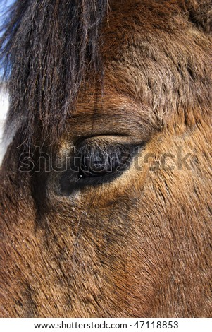 Closeup of the eye of a brown horse. Vertical shot. - stock photo