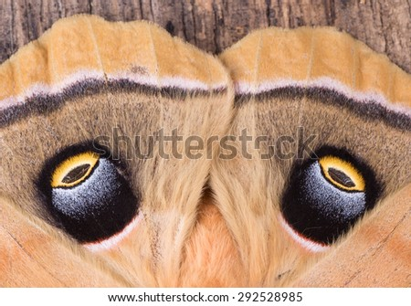 Closeup of the eyespots of a polyphemus moth - stock photo