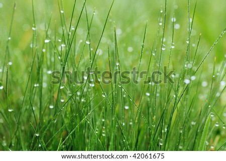 Closeup of the green grass covered dew - stock photo