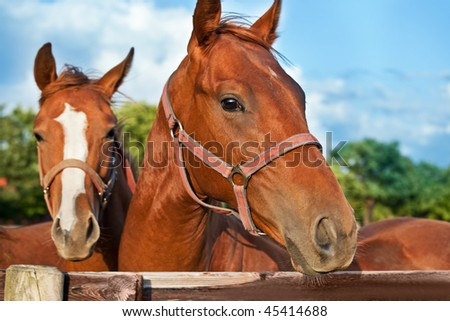 Closeup of the head of a horse on sky background - stock photo