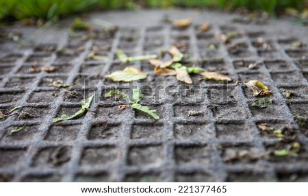Closeup of the metal manhole cover with maple samaras on it. - stock photo