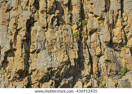 Closeup of the rock surface of the side of Elephant Rock at Seal Rock State Recreation Site, Oregon, showing interesting colors and textures, and a few plants clinging to the cliff. HDR fusion image.  - stock photo