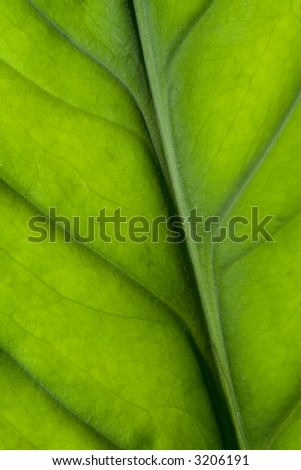 Closeup of the texture of a green leaf