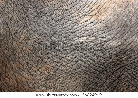 Closeup of the wrinkled skin of an asiatic elephant - stock photo
