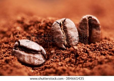 Closeup of three coffee beans lying on ground coffee. Macro of coffee beans. - stock photo