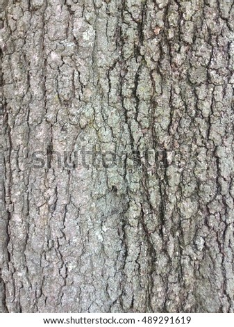 Closeup of Tree - Illustrative