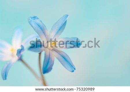 closeup of two blue flowers on a bright background - stock photo