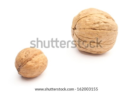 Closeup of two brown and fresh walnuts - small and big -  isolated on white background - stock photo