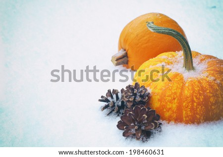 Closeup of Two Mini Pumpkins in Snow as Seasons change from fall to winter with room or space for copy, text.  Vintage Instagram  - stock photo