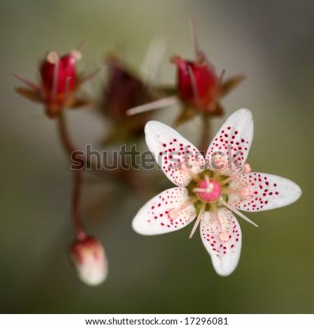 Closeup of very nice flower - stock photo