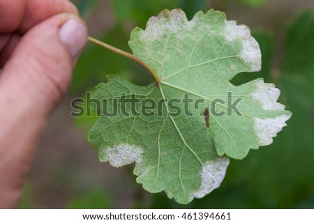 Mildew Stock Images Royalty Free Images Amp Vectors
