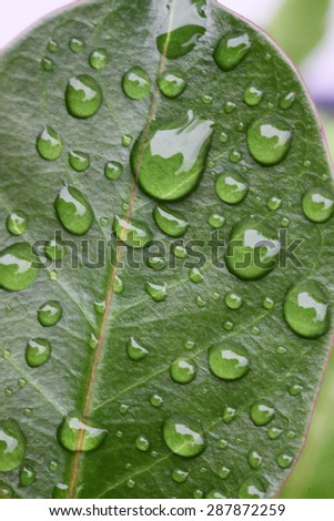 Closeup of water droplets on green leaves - stock photo