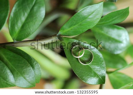 closeup of wedding rings on green leaf - stock photo