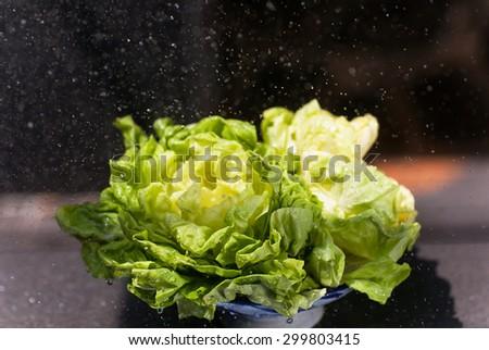 closeup of wet green fresh lettuce in garden Closeup of fresh lettuce with water drops - stock photo