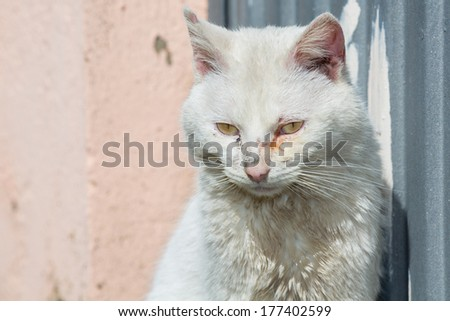 Closeup of white cat head with sick eyes - stock photo