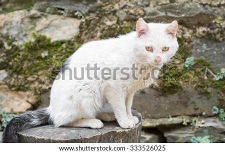 Closeup of white cat with sick eyes and wounded ears - stock photo