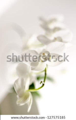 Closeup of white orchid flower with shallow dof. - stock photo