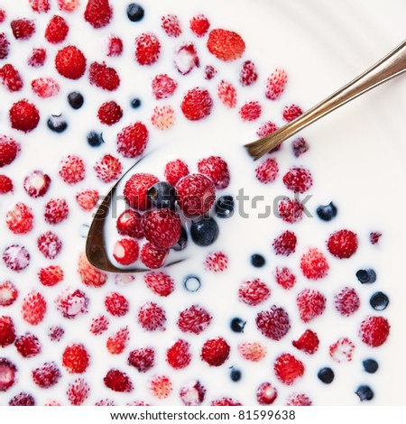 Closeup of wild strawberries and blueberries in silver spoon floating in milk - stock photo