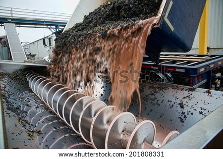 Closeup of wine grapes being dumped from a truck into crusher - stock photo