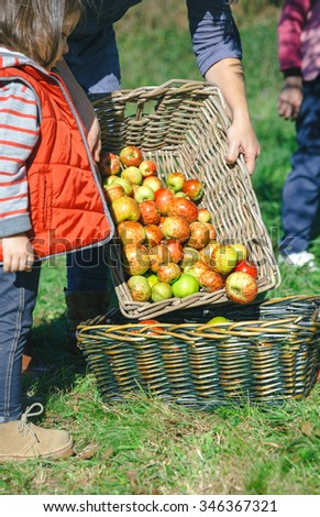 Closeup of woman with basket putting fresh organic apples in other wicker basket with fruit harvest and adorable little girl looking. Nature and family concept.  - stock photo