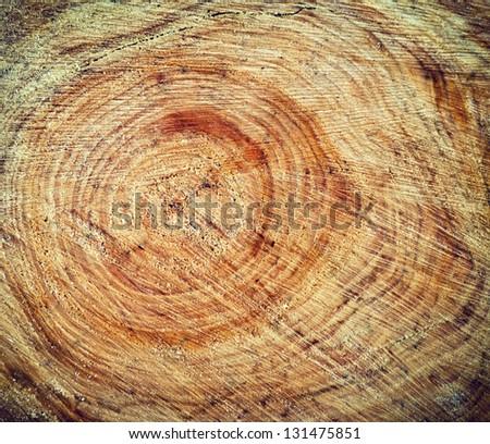 Closeup of wood stump texture - stock photo